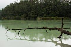 Branche morte au-dessus du lac vert Photo stock