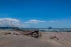 Branche morte devant un volcan Photographie stock