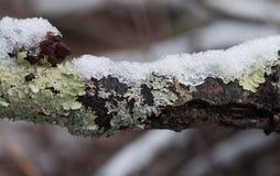 Branche noire couverte de la glace Photo libre de droits