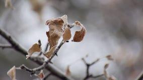 Branche nue d'arbre avec les feuilles sèches dans le jour d'hiver froid, tir statique banque de vidéos