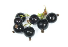 Branche Of Black Currant Royalty Free Stock Photos