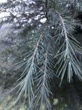 Branche pluvieuse photo libre de droits
