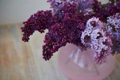 Branche pourpre de lilas dans le vase rose une fleur sensible et belle Photo stock