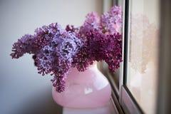 Branche pourpre de lilas dans le vase rose une fleur sensible et belle Images libres de droits
