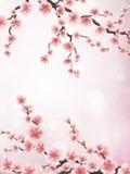 Branche réaliste de cerise du Japon ENV 10 Image libre de droits