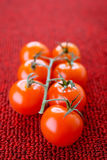 Branche of red tomatoes Stock Photos