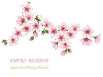 Branche rose de fleurs illustration de vecteur
