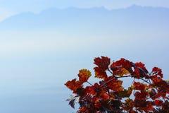 Branche rouge de vignoble avec des Alpes à l'arrière-plan Photos libres de droits