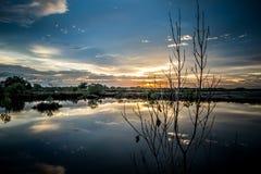 Branche sèche avec le lac Images libres de droits