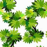 Branche sans couture de modèle des feuilles d'arbre d'érable Vecteur Illustratio illustration stock