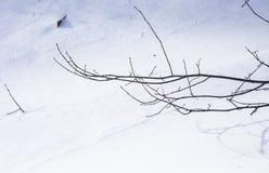 Branche sans feuilles en hiver Photographie stock libre de droits