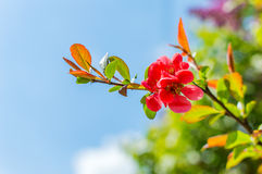 Branche se développante au printemps image stock