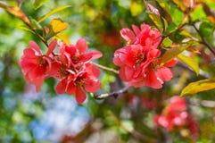 Branche se développante au printemps images libres de droits