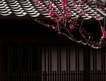 Branche se développante de prune devant une maison japonaise image libre de droits