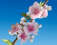 Branche se développante rose-clair d'arbre de ressort sur le bleu Photographie stock libre de droits