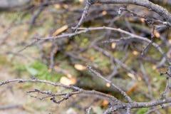 Branche sur l'herbe Photos libres de droits