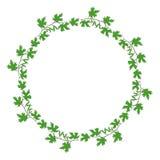 Branche verte Image libre de droits