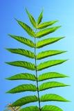 Branche verte Photo libre de droits