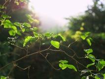 Branche verte au soleil Image libre de droits
