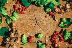 Branche verte d'houblon, houblon sec brun et viburnum sur le bois criqué Photos stock