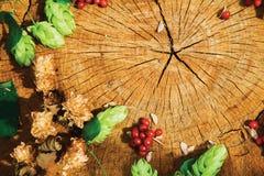 Branche verte d'houblon, houblon sec brun et viburnum sur le bois criqué Photographie stock