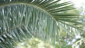 Branche verte de paume sur le fond brouillé Photo stock