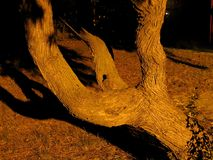 Branched Tree. Urban park tree detail at night, side-on royalty free stock photos