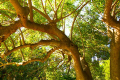 Branched tree crown. In the sun Royalty Free Stock Image