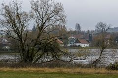 Branched tree growing on the shore of a pond near a small village. In autumn Royalty Free Stock Photography