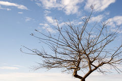 Branched tree Stock Images