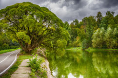 Branched tree by the water Royalty Free Stock Photos