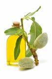 Branchement d'amande et d'huile d'amandes photo stock