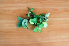 branchement d'Apple-arbre Photos stock