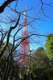 Branchement d'arbre avec le fond de tour de Tokyo Photos libres de droits