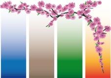 Branchement d'arbre avec les fleurs roses Photographie stock libre de droits