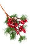 Branchement d'arbre décoré de Noël Photos libres de droits