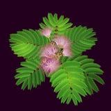 Branchement d'arbre de floraison Images libres de droits