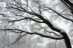 Branchement d'arbre de l'hiver Photographie stock libre de droits