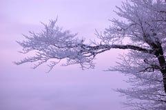 Branchement d'arbre de neige, montagnes Image libre de droits