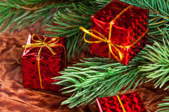 Branchement d'arbre de Noël photos libres de droits