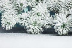 Branchement d'arbre de Noël image stock