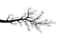Branchement d'arbre de source illustration stock