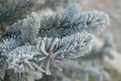 Branchement d'arbre gelé Images libres de droits
