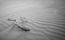 Branchement d'arbre lavé vers le haut sur la plage Photographie stock