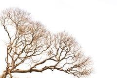 Branchement d'arbre mort Image libre de droits
