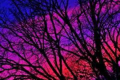 Branchement d'arbre nu Photo stock