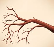 Branchement d'arbre nu Photographie stock