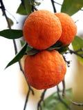 Branchement d'arbre orange photographie stock libre de droits