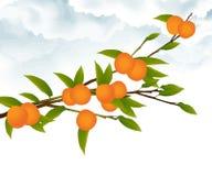 Branchement d'arbre orange Photo libre de droits