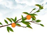 Branchement d'arbre orange illustration libre de droits